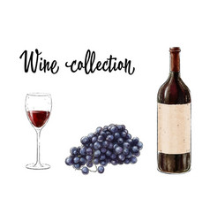 bottle of red wine with a glass and grape cluster vector image