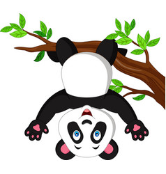 cartoon panda hanging on tree branch vector image
