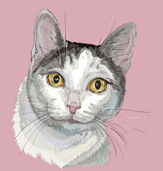 Colorful cat white and grey color vector