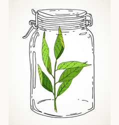 Hand drawn jar with green branch vector