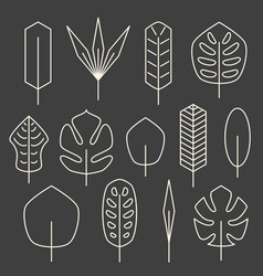 minimalistic linear palm leaf set on grey vector image