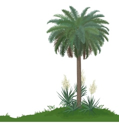 Palm tree and plants Yucca vector image
