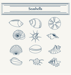 Set of seashells in a linear style vector