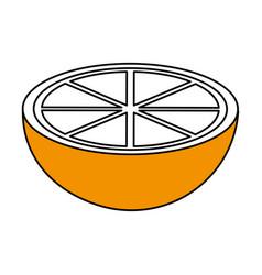 sketch color silhouette slice orange fruit vector image