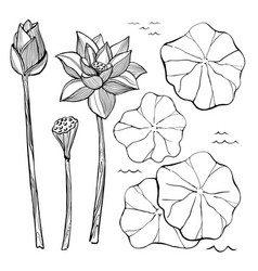 Sketch set of flowers and leaves of the vector
