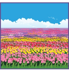 Field of tulips vector