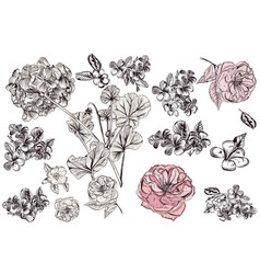 collection or set of hand drawn detailed flowers vector image