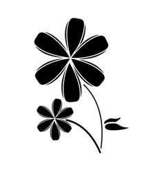Plumeria flower decoration pictogram vector