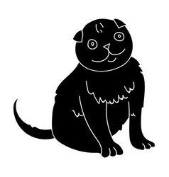 Scottish fold icon in black style isolated on vector