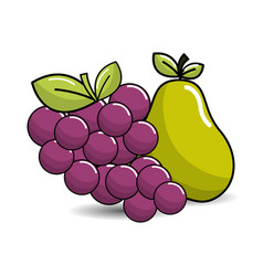 grape and pear fruits icon vector image vector image