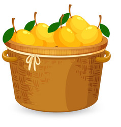 A basket mango vector