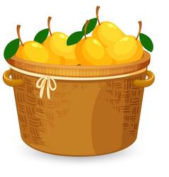 A basket of mango vector