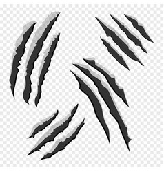 Claws scratches isolated on transparent background vector