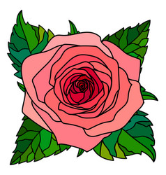 Graphic image a large pink rose with green leav vector