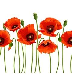 Red poppies in a row vector image