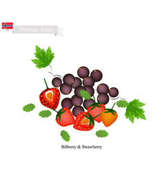 Bilberry and strawberry the popular fruits of nor vector