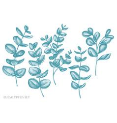set hand drawn pastel eucalyptus vector image