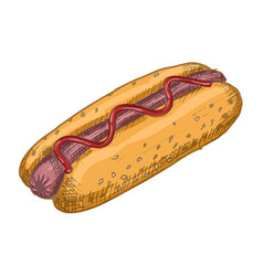 vintage hot dog drawing hand drawn color vector image