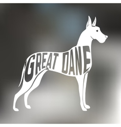 Creative design of grat dane breed inside dog vector image