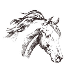 Freehand sketch of horse head isolated on white vector