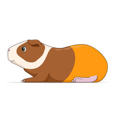 guinea pig animal standing on a white background vector image