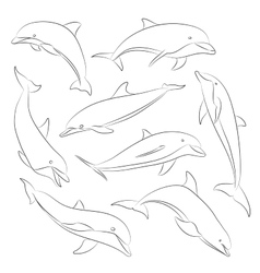 hand drawn set of dolphins vector image