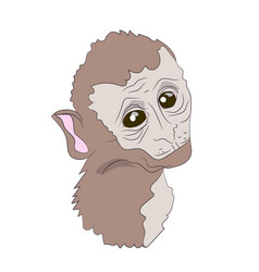 monkey portrait vector image