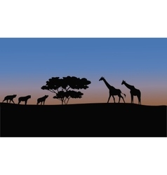 Silhouette of giraffe and puma vector