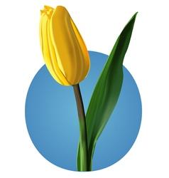 Yellow tulip mesh vector image