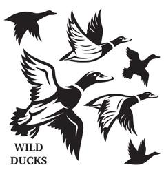 set of flying wild ducks vector image