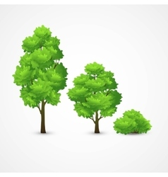 a set of different trees vector image