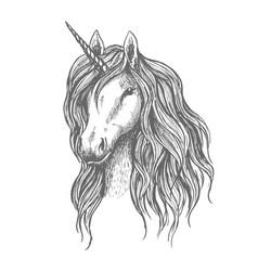 unicorn head with mane sketch vector image vector image