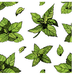 seamless pattern with mint mint drawing vector image