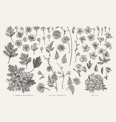set with plant elements vector image