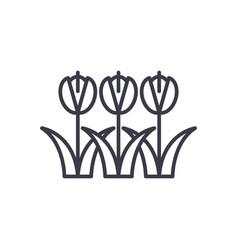 tulips symbol concept thin line icon vector image