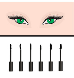 a girls eyes and types of mascara vector image