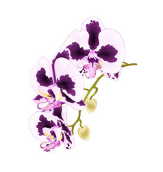 Stem orchid phalaenopsis with spots vector