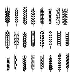 Wheat ear icon set graphic design elements black vector image vector image