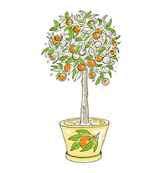 colorful drawing citrus fruit concept vector image vector image