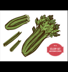 Collection of hand drawn colored celery vector