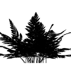 Fern graphic vector