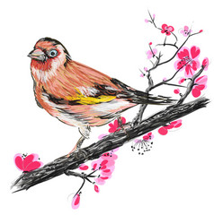 goldfinch on the branch of blooming cherry blossom vector image