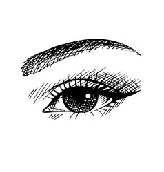 Lady beautiful eye sketch vector