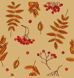 seamless pattern of rowan berries hand vector image