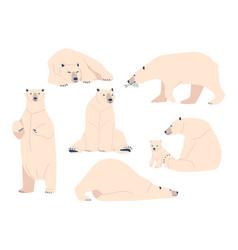 set white bear wild polar arctic animal predator vector image