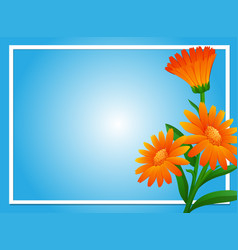 Border template with orange calendula vector