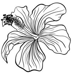Hibiscus in line art style vector