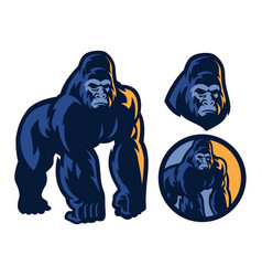 big muscle body of gorilla mascot vector image