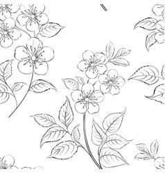 cherry blossom seamless pattern hand drawn spring vector image