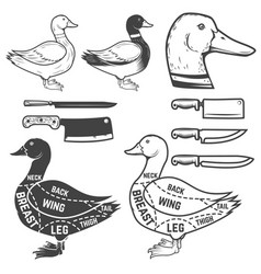 Duck butcher diagram design element for poster vector